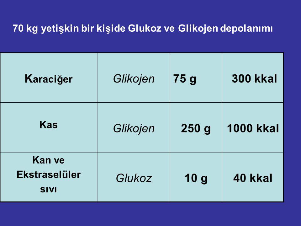 70 kg yetişkin bir kişide Glukoz ve Glikojen depolanımı K araciğer Glikojen75 g 300 kkal Kas Glikojen250 g1000 kkal Kan ve Ekstraselüler sıvı Glukoz10 g40 kkal