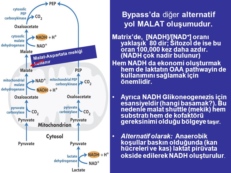 Matrix'de, [NADH]/[NAD + ] oranı yaklaşık 80 dir; Sitozol de ise bu oran 100,000 kez daha azdır.