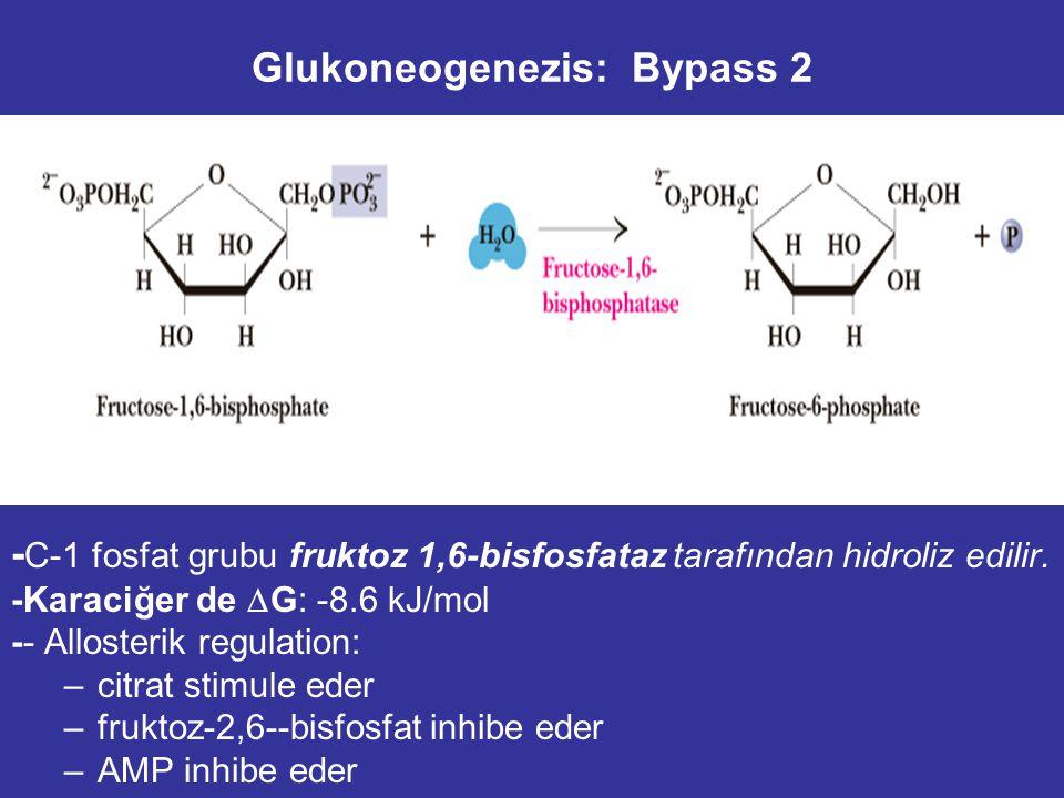 Glukoneogenezis: Bypass 2 - C-1 fosfat grubu fruktoz 1,6-bisfosfataz tarafından hidroliz edilir.
