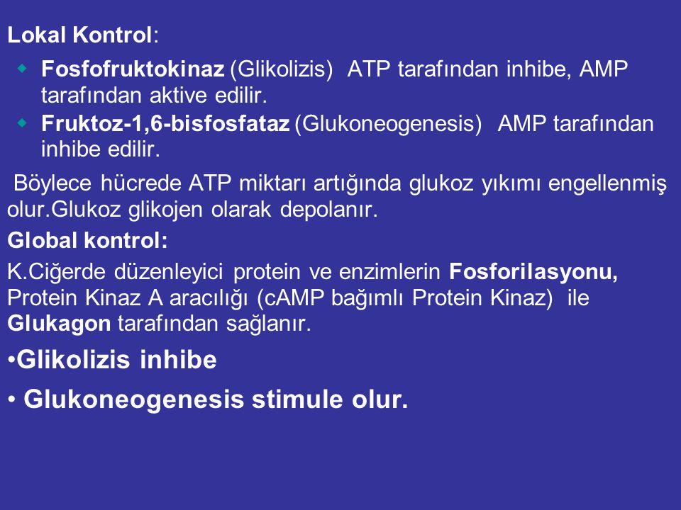 Lokal Kontrol:  Fosfofruktokinaz (Glikolizis) ATP tarafından inhibe, AMP tarafından aktive edilir.