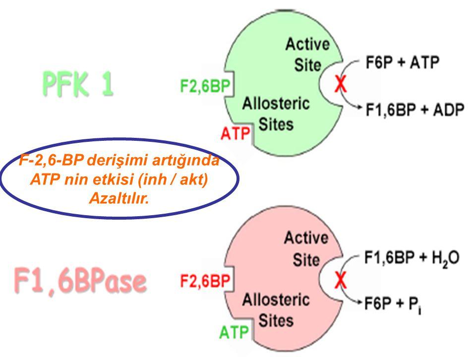 F-2,6-BP derişimi artığında ATP nin etkisi (inh / akt) Azaltılır.