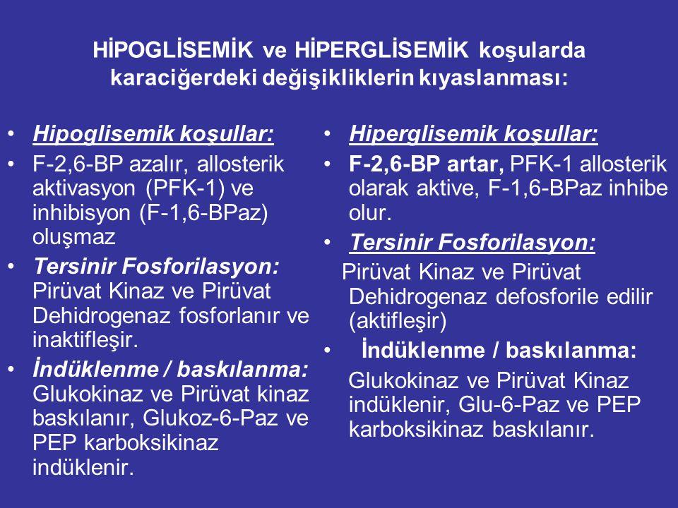 HİPOGLİSEMİK ve HİPERGLİSEMİK koşularda karaciğerdeki değişikliklerin kıyaslanması: Hipoglisemik koşullar: F-2,6-BP azalır, allosterik aktivasyon (PFK-1) ve inhibisyon (F-1,6-BPaz) oluşmaz Tersinir Fosforilasyon: Pirüvat Kinaz ve Pirüvat Dehidrogenaz fosforlanır ve inaktifleşir.