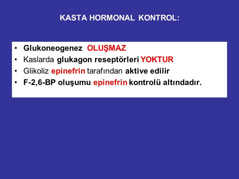 KASTA HORMONAL KONTROL: Glukoneogenez OLUŞMAZ Kaslarda glukagon reseptörleri YOKTUR Glikoliz epinefrin tarafından aktive edilir F-2,6-BP oluşumu epinefrin kontrolü altındadır.