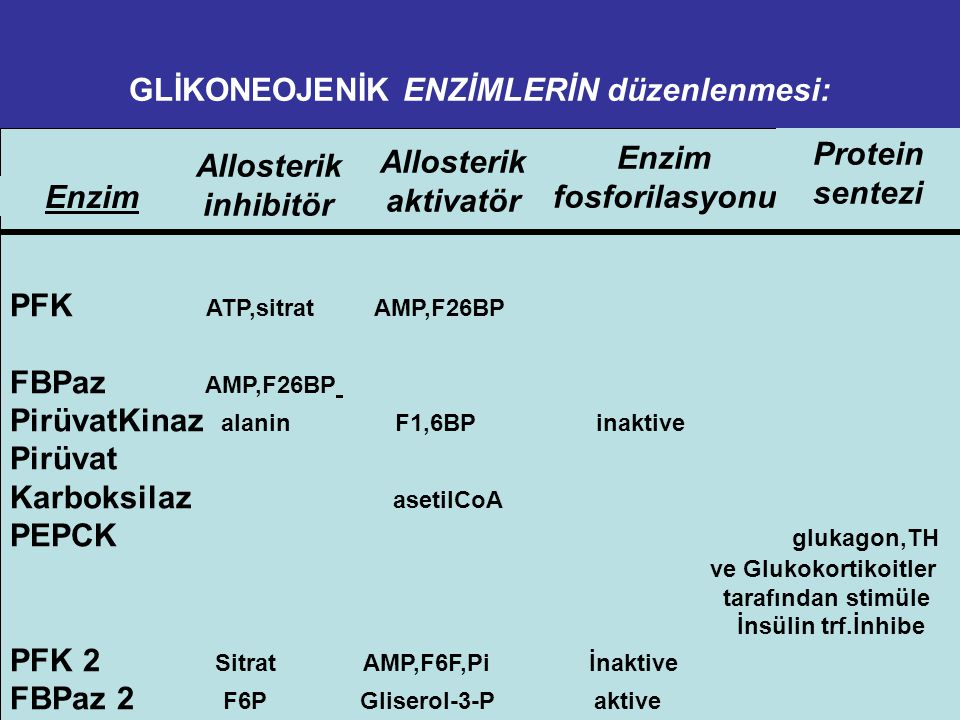 GLİKONEOJENİK ENZİMLERİN düzenlenmesi: PFK ATP,sitrat AMP,F26BP FBPaz AMP,F26BP PirüvatKinaz alanin F1,6BP inaktive Pirüvat Karboksilaz asetilCoA PEPCK glukagon,TH ve Glukokortikoitler tarafından stimüle İnsülin trf.İnhibe PFK 2 Sitrat AMP,F6F,Pi İnaktive FBPaz 2 F6P Gliserol-3-P aktive Enzim Allosterik inhibitör Allosterik aktivatör Enzim fosforilasyonu Protein sentezi