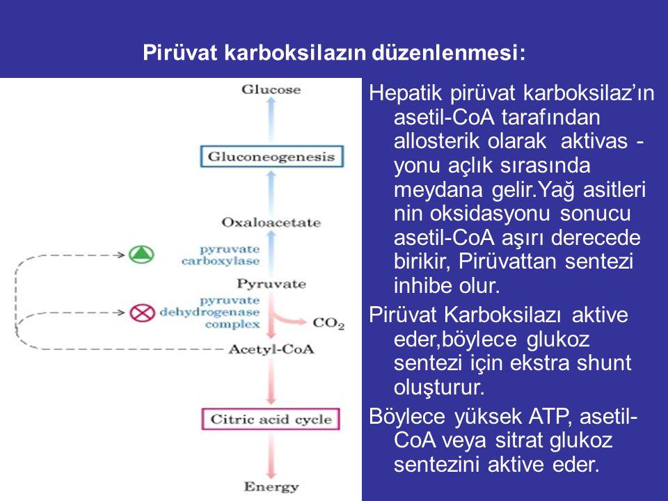 Pirüvat karboksilazın düzenlenmesi: Hepatik pirüvat karboksilaz'ın asetil-CoA tarafından allosterik olarak aktivas - yonu açlık sırasında meydana gelir.Yağ asitleri nin oksidasyonu sonucu asetil-CoA aşırı derecede birikir, Pirüvattan sentezi inhibe olur.