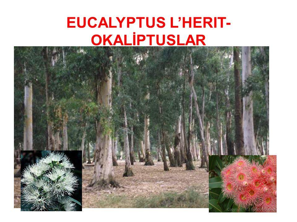 Nüfusun hızla artması ve yaşam düzeyinin yükselmesi, buna karşılık Türkiye de ormanların verimlilik yönünden yetersiz oluşu gibi nedenlerle, ülkemizde endüstriyel odundaki arz-talep dengesi sağlanamamaktadır.