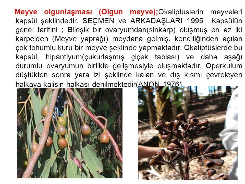 Kapsüllerin rengi olgunlaşmayla yeşilden kahverengiye dönüşmektedir.Olgun kapsüller ağaç üzerinde aylarca ve hatta bazı türler 2 veya daha fazla yıl tohumlarını dökmeden kapalı kalabilirler.Eğer kapsüller veya bunları taşıyan dallar koparsa kapsül kapakçılarının açılmasıyla tohum ve chafflar dökülür(ANON 1979)