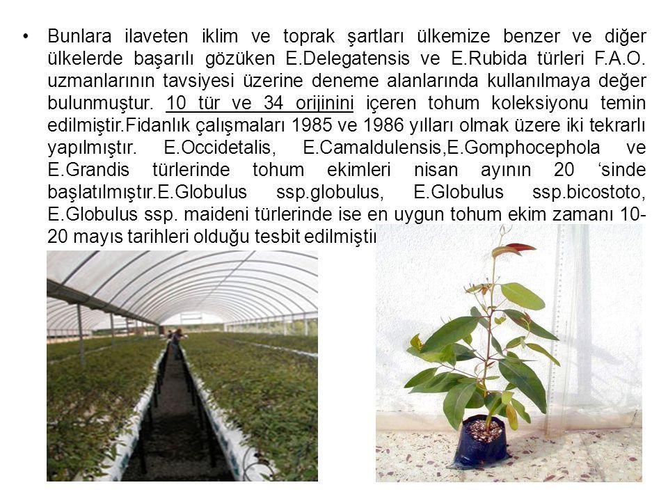 Bu çalışmaların arazi deneme aşamasında potansiyel alanları karakterize eden Aydın, Muğla, Antalya, Tarsus, Adana yörelerinde değişik ekolojik koşullara sahip 6 deneme alanında çalışılmıştır.Mukayese denemelerinde elde edilen sonuçlarda E.Camaldulensis 3,5x3,5 dikim aralıklarında hektardaki yıllık artım 33,482 m³, E.Grandis'te 35,000 m³ olmuştur.