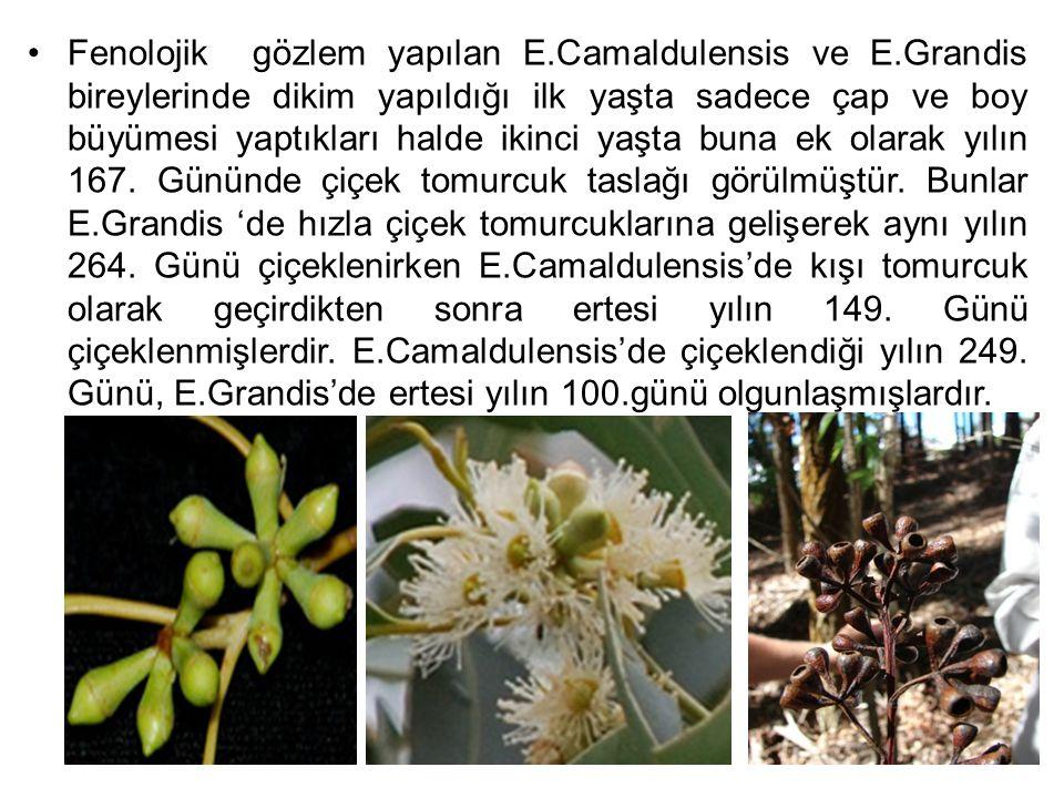 Arıcılar tarafından Okaliptüslerde çiçeklenme günlerinin bilinmesi bal verimi ve kalitesini arttırma yönünden önemli bulunmaktadır.