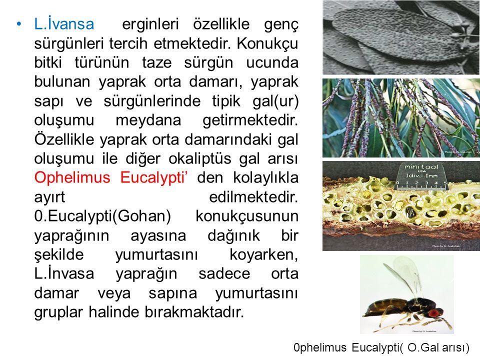 L.İnvasa toprak yüzeyinden 32,70 m.Yüksekliklere kadar yumurta koyabildiği saptanmıştır.