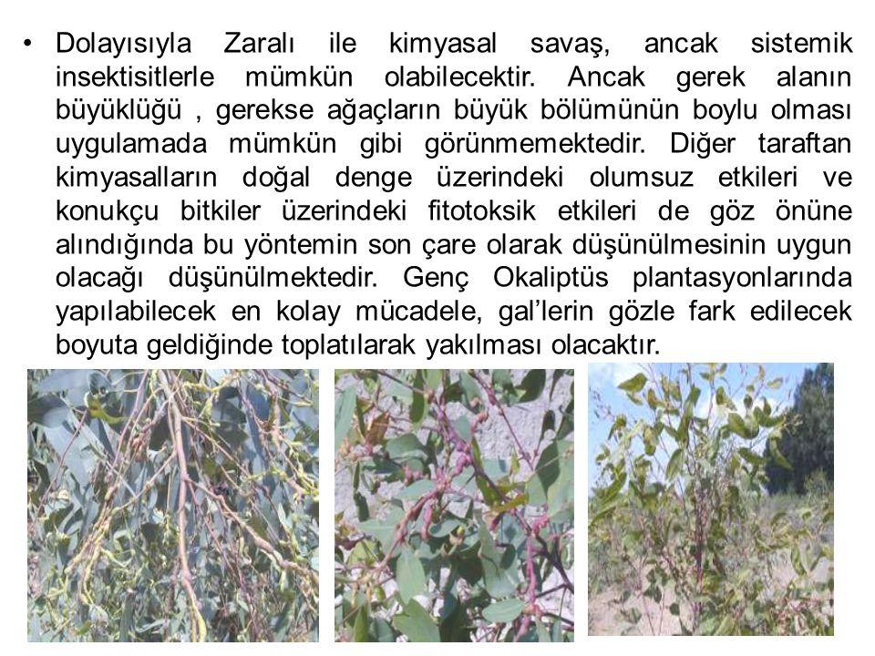 Okaliptus zararlılarına karşı alınacak tedbirler şu şekilde sıralanabilir; 1-Sağlıklı,doğal şartlara uyum sağlayabilecek üstün nitelikte ki fidanlarla ağaçlandırma yapılmalıdır.