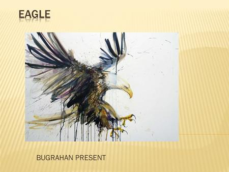 BUGRAHAN PRESENT. Eagle is a common name for many large birds of prey of the family Accipitridae; it belongs to several groups of genera that are not.