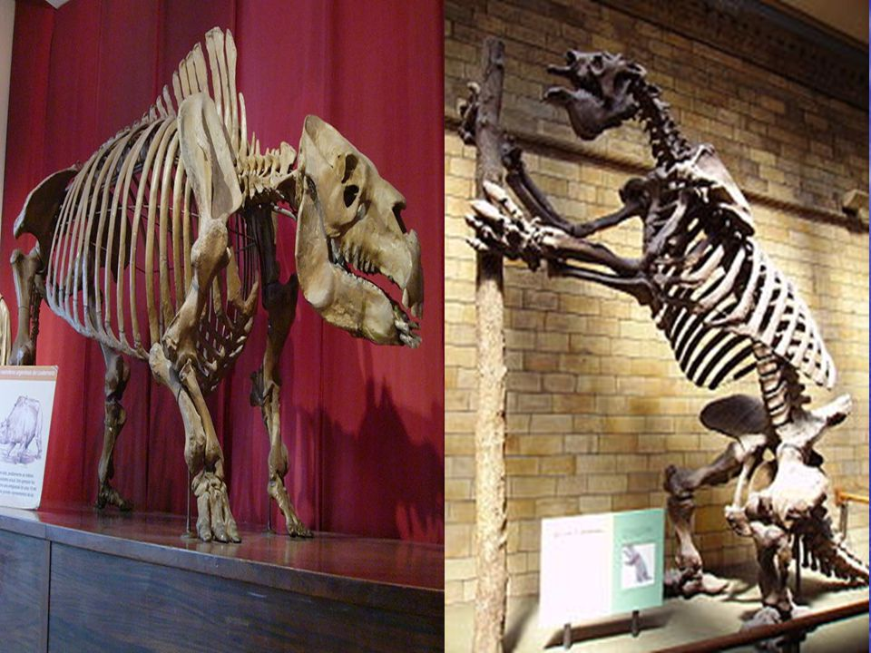 Ona göre, taşıl hayvanlarla yaşayanlar arasındaki benzerlik ve farklılıklardan yararlanarak, türlerin nasıl yok oldukları ve nasıl evrimleştikleri izlenebilirdi.