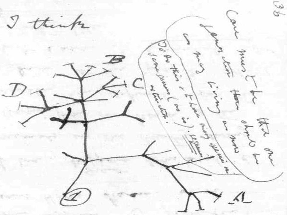 Darwin'in sağlığı 1870'lerden sonra bozulmaya başladı.