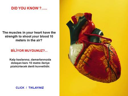 SABIAS QUE… The muscles in your heart have the strength to shoot your blood 10 meters in the air? DID YOU KNOW ?….. BİLİYOR MUYDUNUZ?... Kalp kaslarınız,