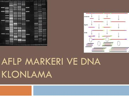 Aflp markeri ve dna klonlama