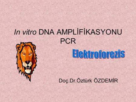 In vitro DNA AMPLİFİKASYONU PCR