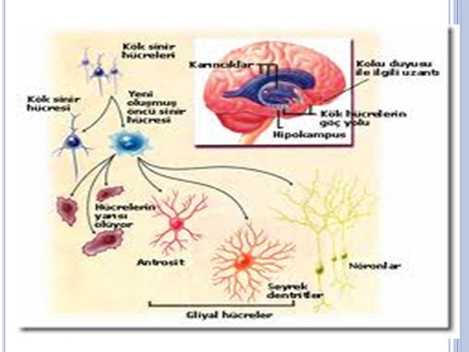 5)OMURİLİK Omurga halkalarının meydana getirdiği oluk içinde beyinden 45 cm kadar aşağı doğru uzanır.