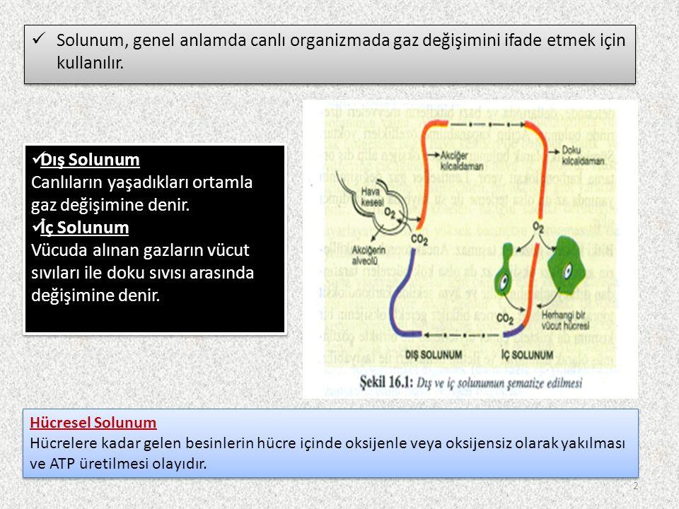 Dış Solunum Canlıların yaşadıkları ortamla gaz değişimine denir.