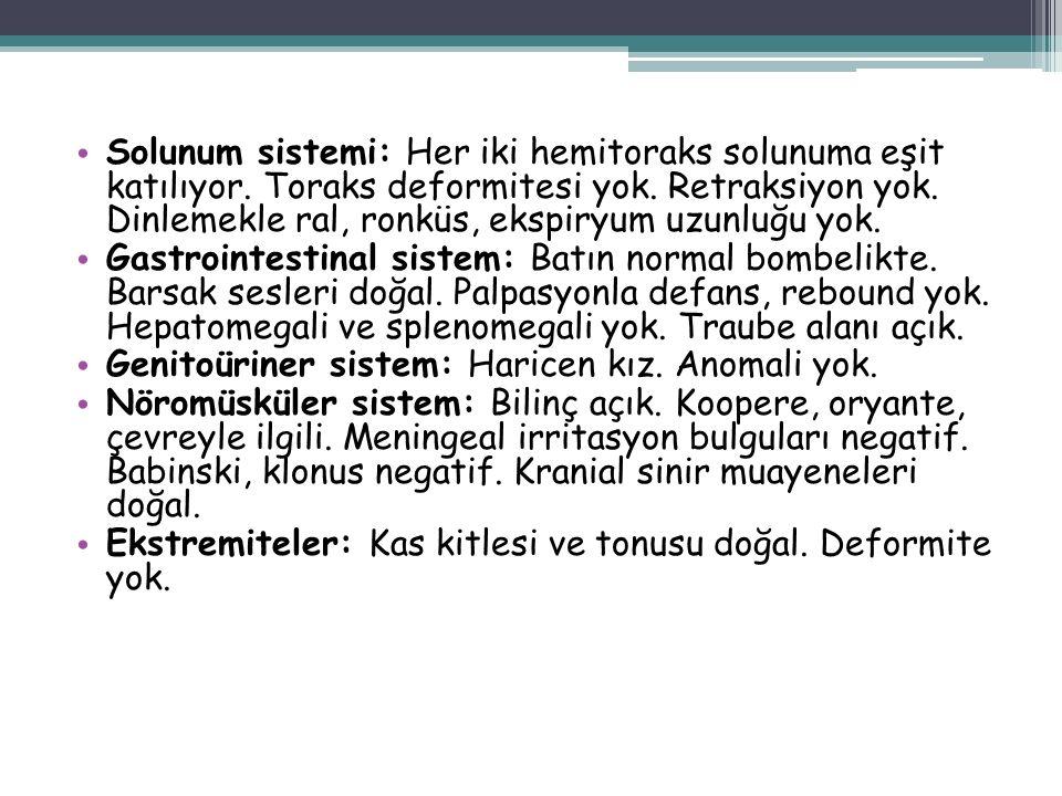 Solunum sistemi: Her iki hemitoraks solunuma eşit katılıyor