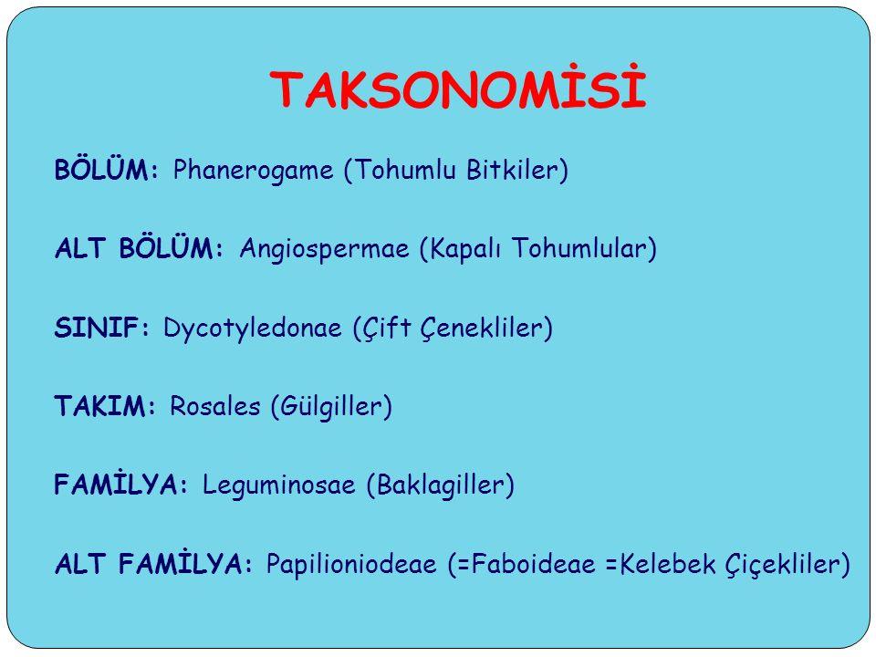 TAKSONOMİSİ