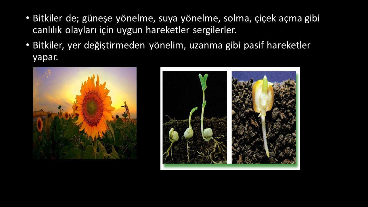 Bitkiler de; güneşe yönelme, suya yönelme, solma, çiçek açma gibi canlılık olayları için uygun hareketler sergilerler.