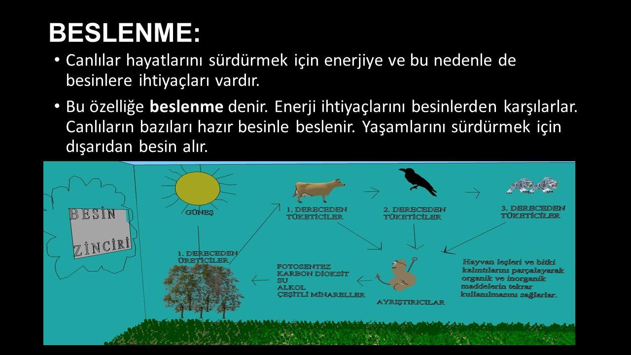 BESLENME: Canlılar hayatlarını sürdürmek için enerjiye ve bu nedenle de besinlere ihtiyaçları vardır.