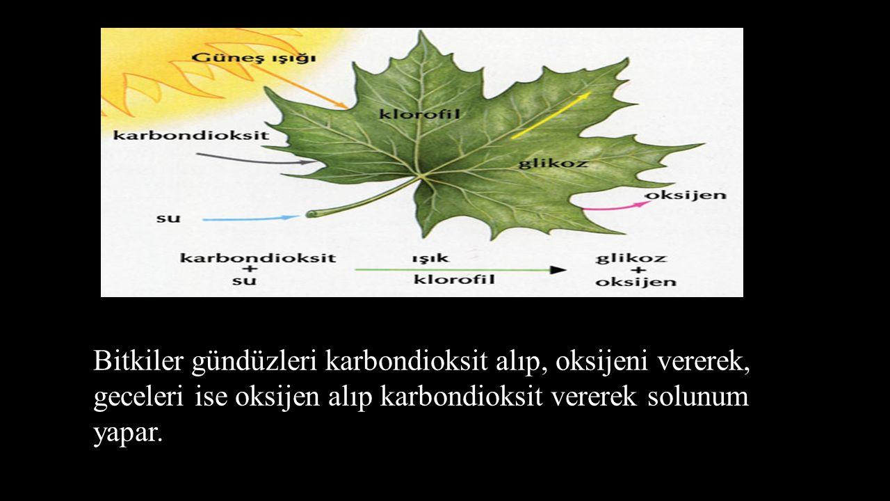 Bitkilerde soluk alıp verme organı yapraklardır.