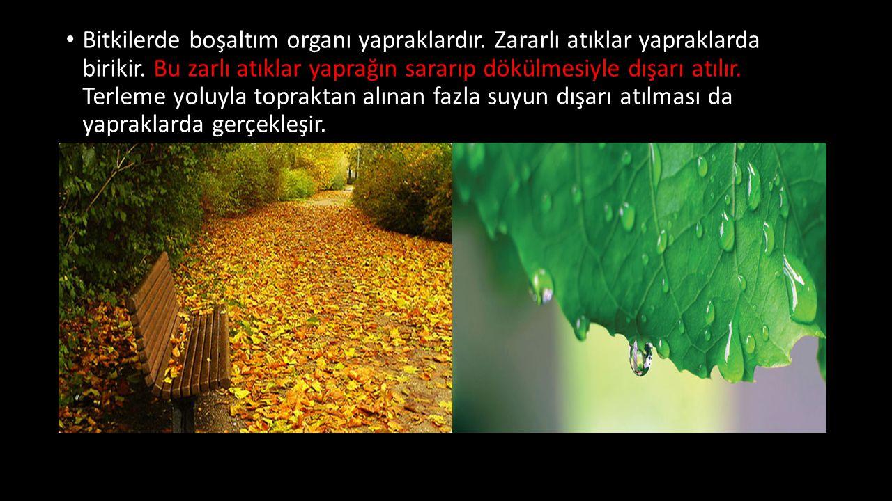 Bitkilerde boşaltım organı yapraklardır