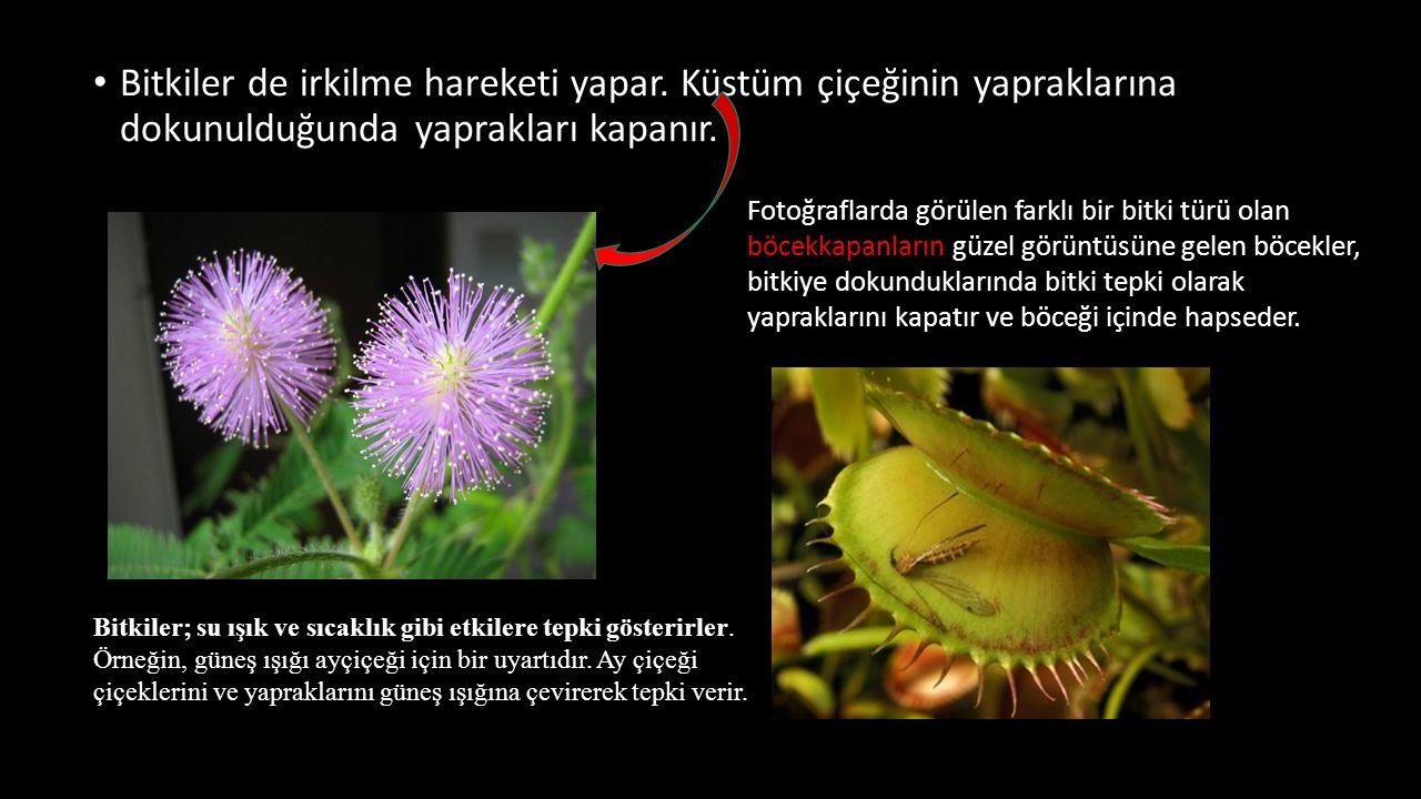 Bitkiler de irkilme hareketi yapar
