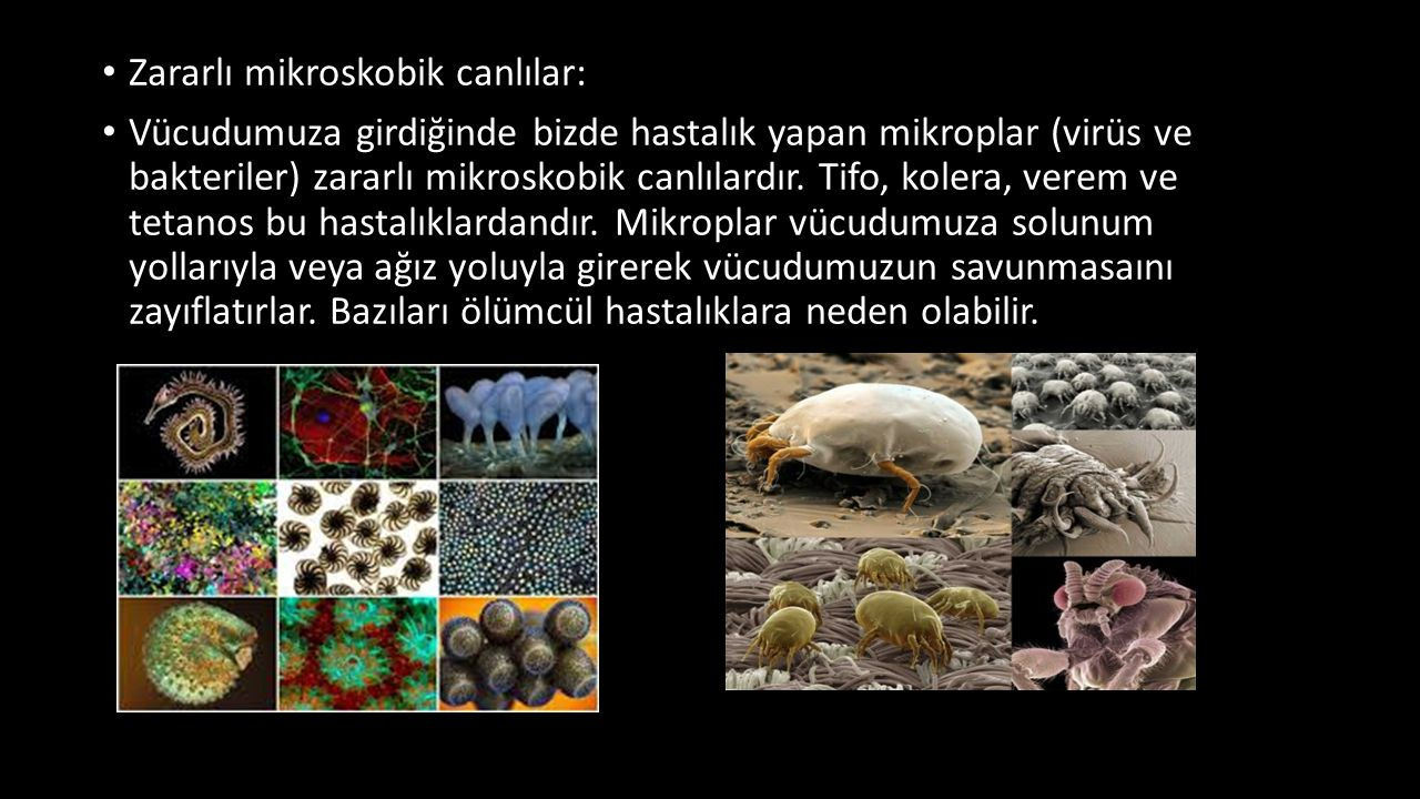 Zararlı mikroskobik canlılar: