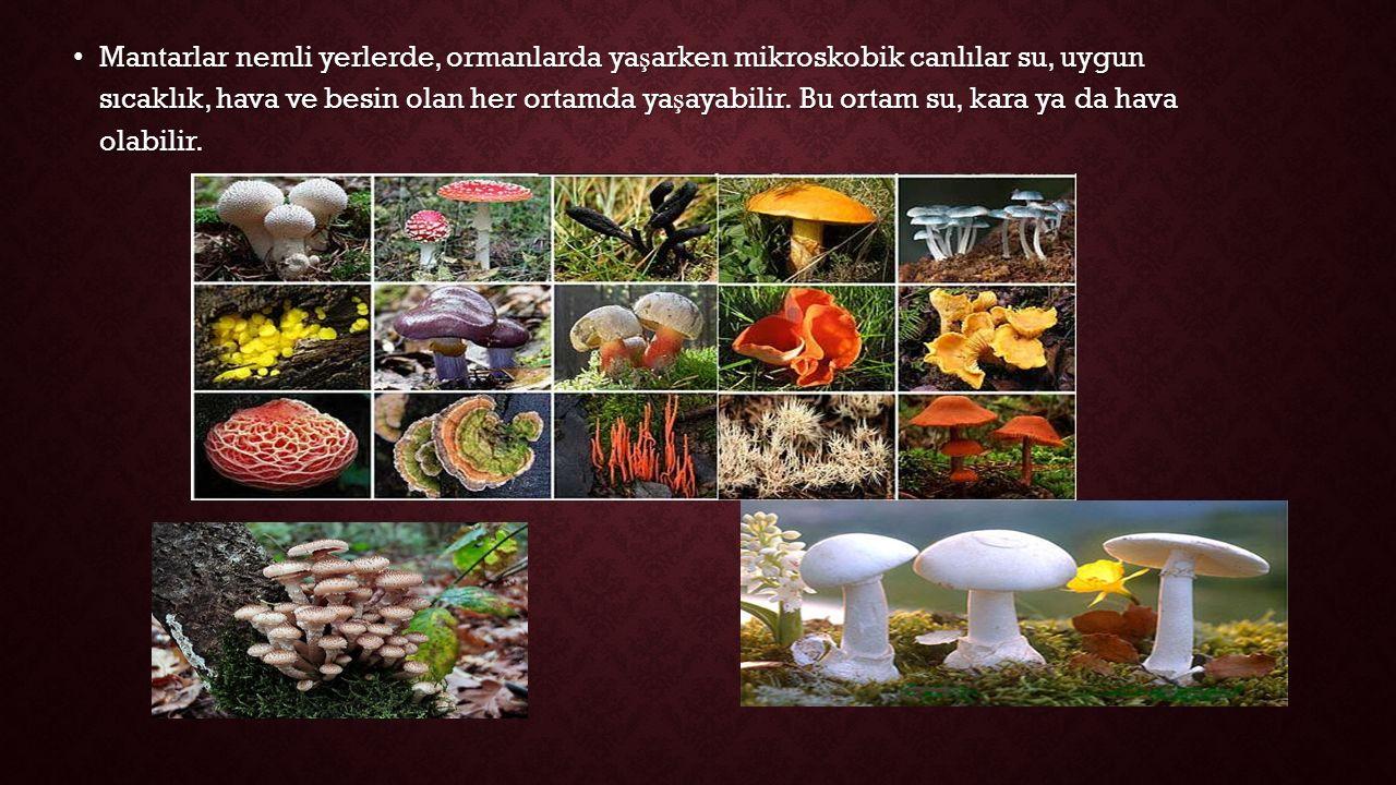 Mantarlar nemli yerlerde, ormanlarda yaşarken mikroskobik canlılar su, uygun sıcaklık, hava ve besin olan her ortamda yaşayabilir.