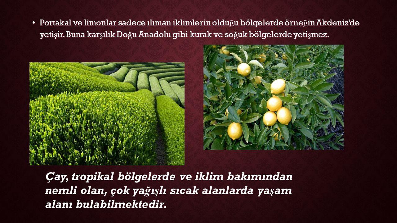 Portakal ve limonlar sadece ılıman iklimlerin olduğu bölgelerde örneğin Akdeniz'de yetişir. Buna karşılık Doğu Anadolu gibi kurak ve soğuk bölgelerde yetişmez.