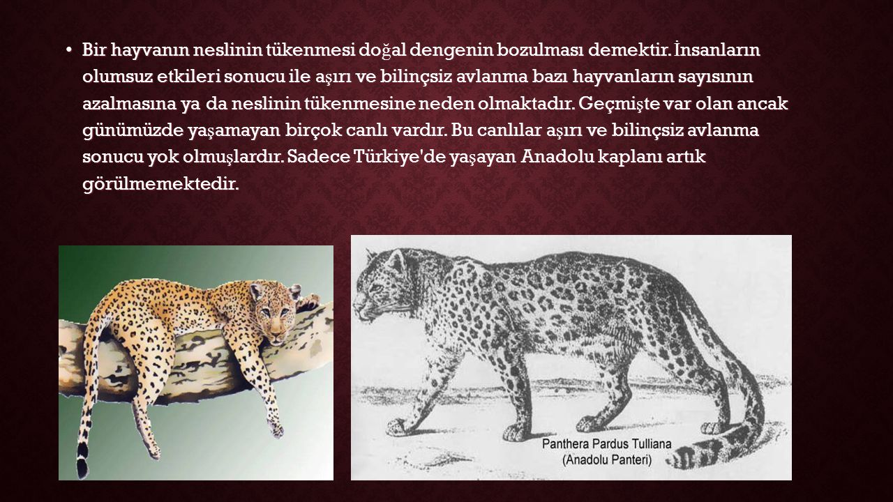Bir hayvanın neslinin tükenmesi doğal dengenin bozulması demektir