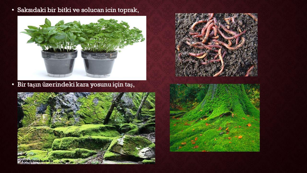 Saksıdaki bir bitki ve solucan icin toprak,