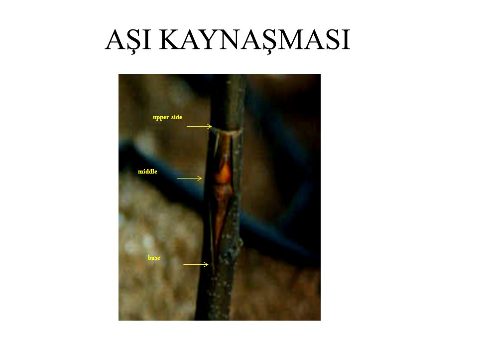 AŞI KAYNAŞMASI upper side middle base