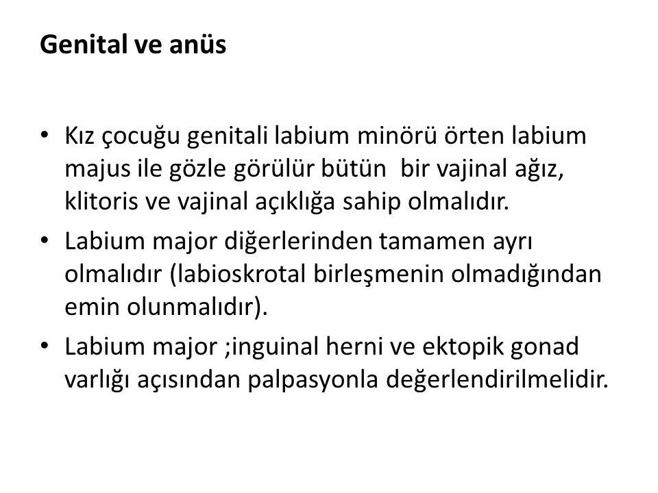 Genital ve anüs