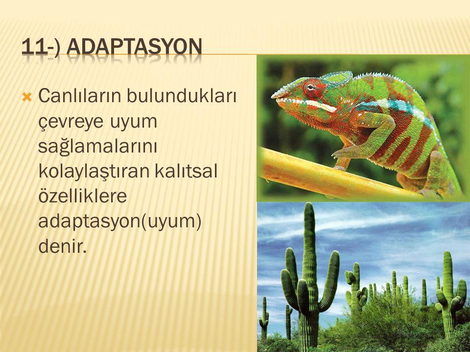 11-) adaptasyon Canlıların bulundukları çevreye uyum sağlamalarını kolaylaştıran kalıtsal özelliklere adaptasyon(uyum) denir.