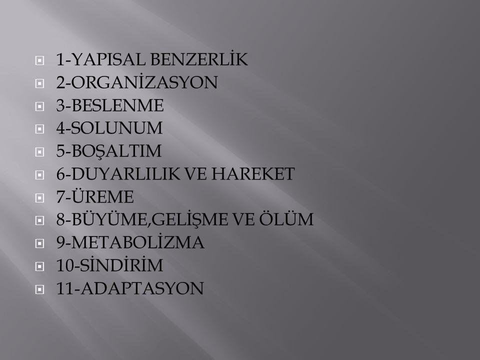 1-YAPISAL BENZERLİK 2-ORGANİZASYON. 3-BESLENME. 4-SOLUNUM. 5-BOŞALTIM. 6-DUYARLILIK VE HAREKET.