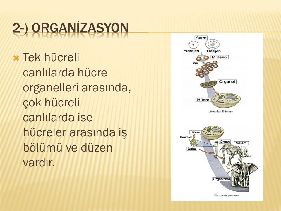 2-) ORGANİZASYON Tek hücreli canlılarda hücre organelleri arasında, çok hücreli canlılarda ise hücreler arasında iş bölümü ve düzen vardır.