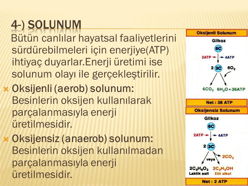4-) solunum