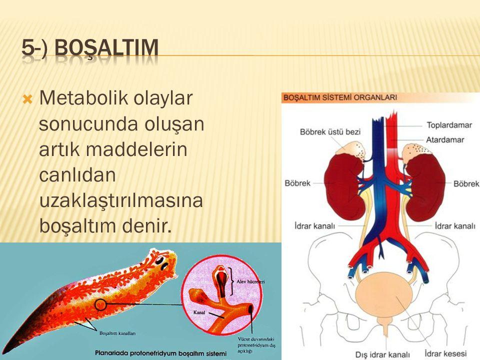 5-) boşaltIm Metabolik olaylar sonucunda oluşan artık maddelerin canlıdan uzaklaştırılmasına boşaltım denir.
