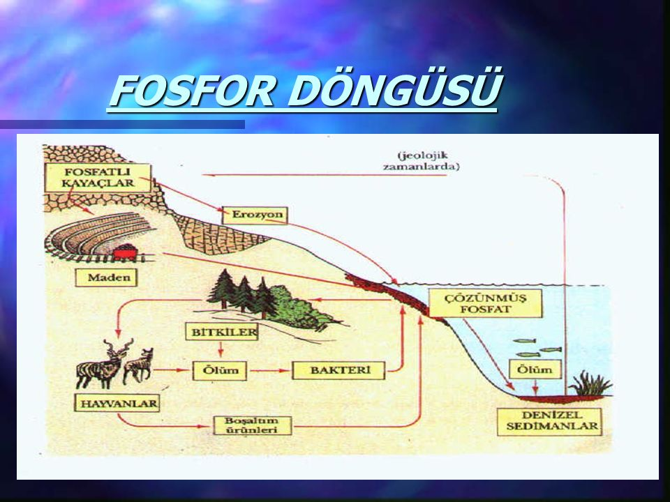 FOSFOR DÖNGÜSÜ