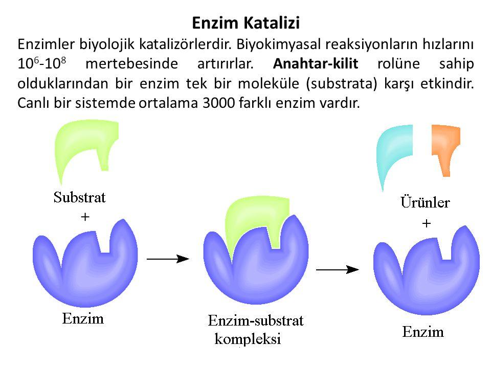 Enzim Katalizi
