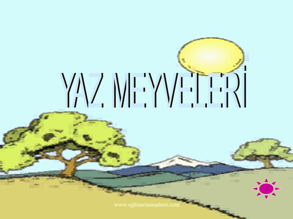 YAZ MEYVELERİ www.egitimcininadresi.com