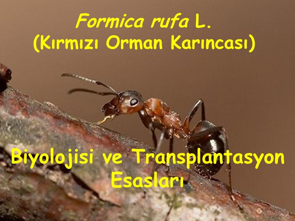 (Kırmızı Orman Karıncası) Biyolojisi ve Transplantasyon Esasları