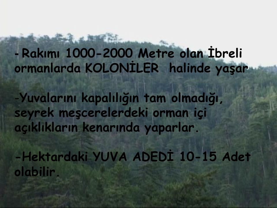 - Rakımı 1000-2000 Metre olan İbreli ormanlarda KOLONİLER halinde yaşar