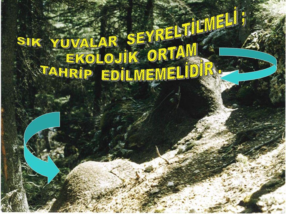 SIK YUVALAR SEYRELTİLMELİ ;