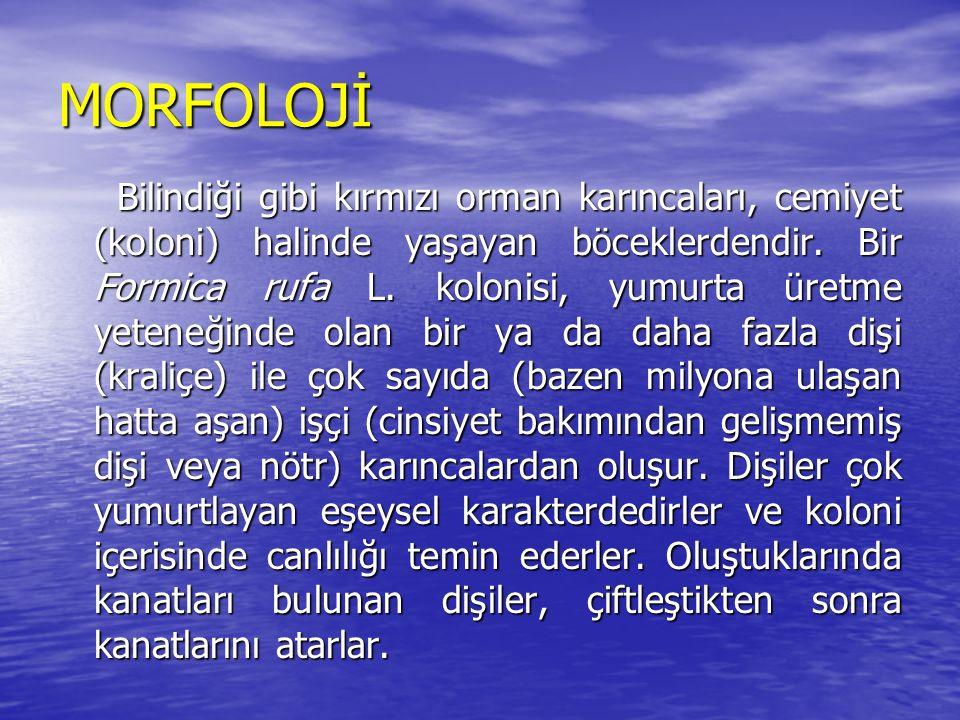 MORFOLOJİ