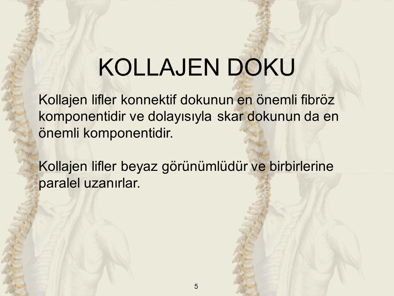 KOLLAJEN DOKU Kollajen lifler konnektif dokunun en önemli fibröz komponentidir ve dolayısıyla skar dokunun da en önemli komponentidir.